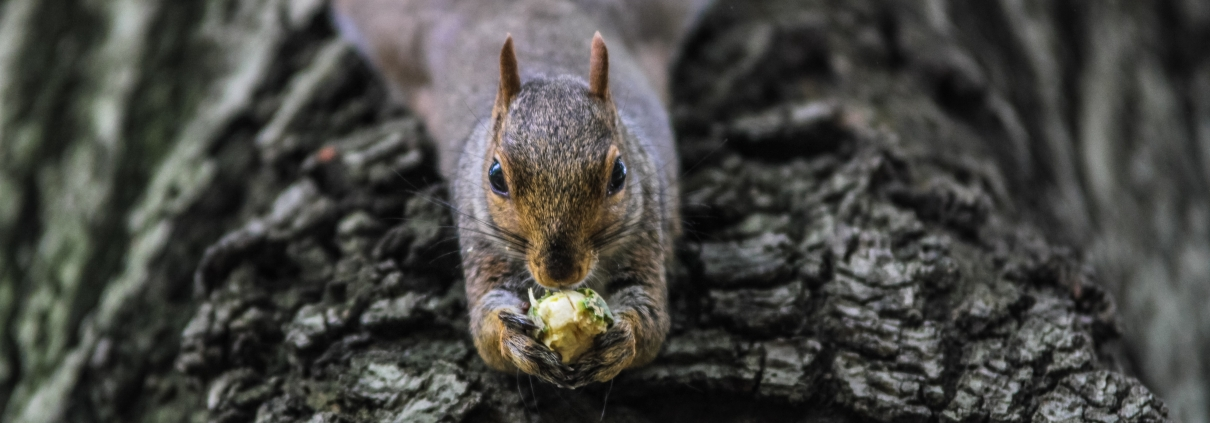 eating macro squirrel